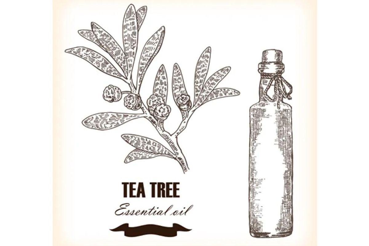 7 Uses for Tea Tree Oil