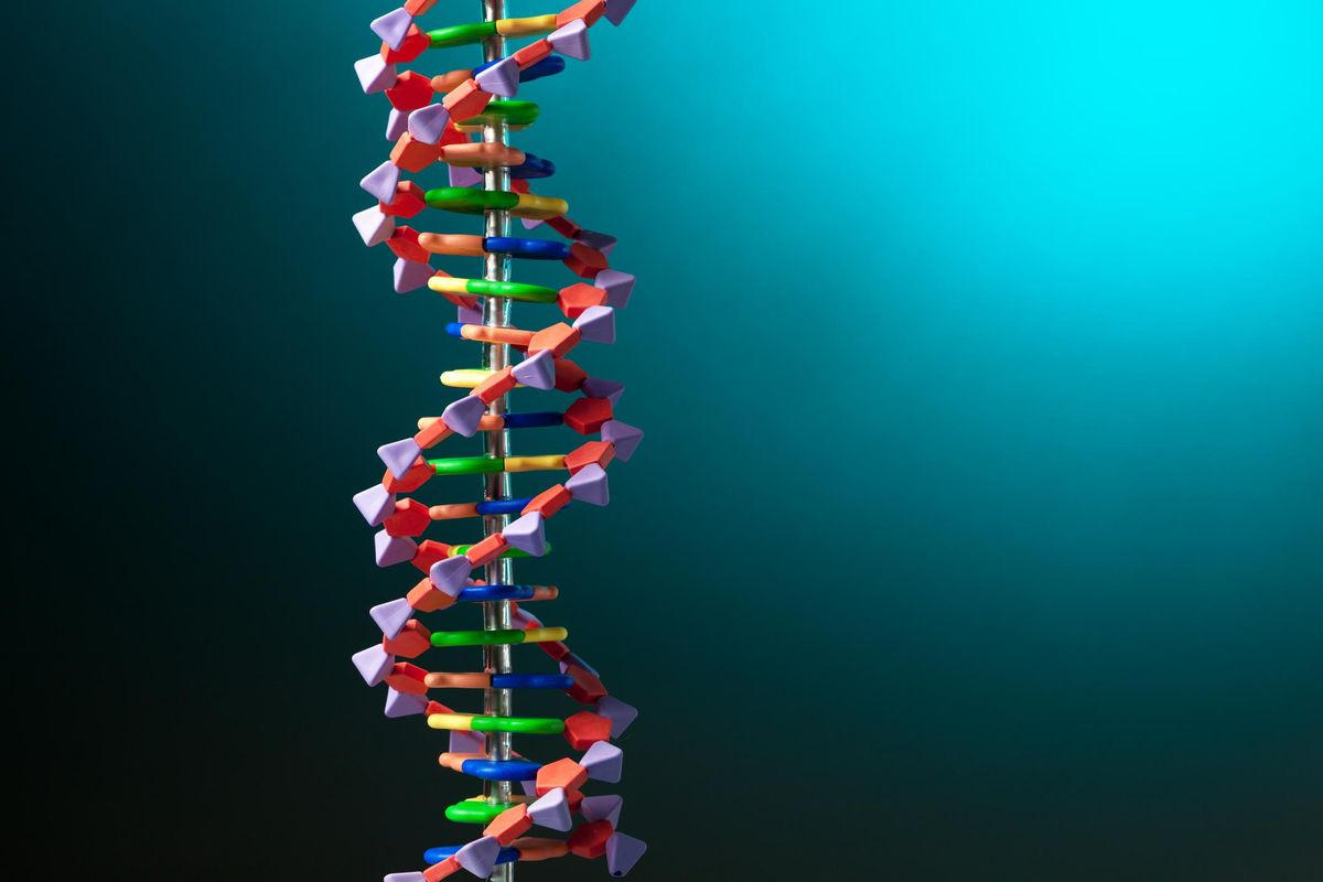 A strand of DNA displayed in a model.