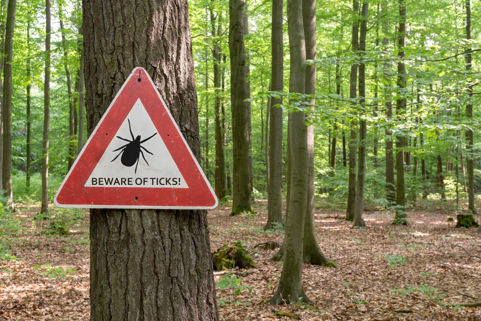 Early Signs of Lyme Disease