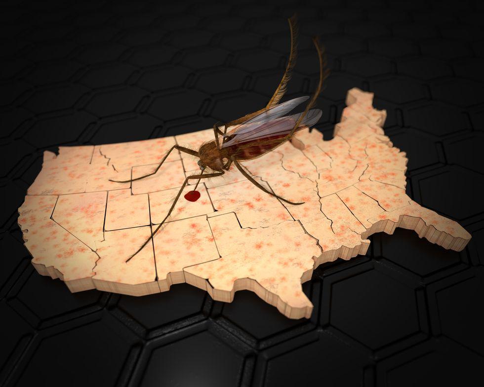 no us zika outbreak