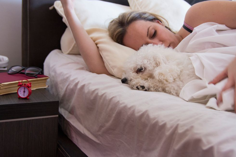 Do You Share a Bed With Your Dog?