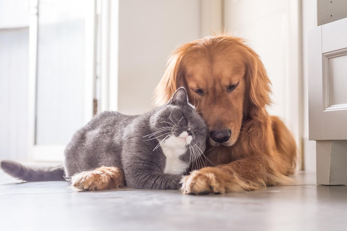 How to Help Dogs and Cats Manage Separation Anxiety When Their Humans Return to Work