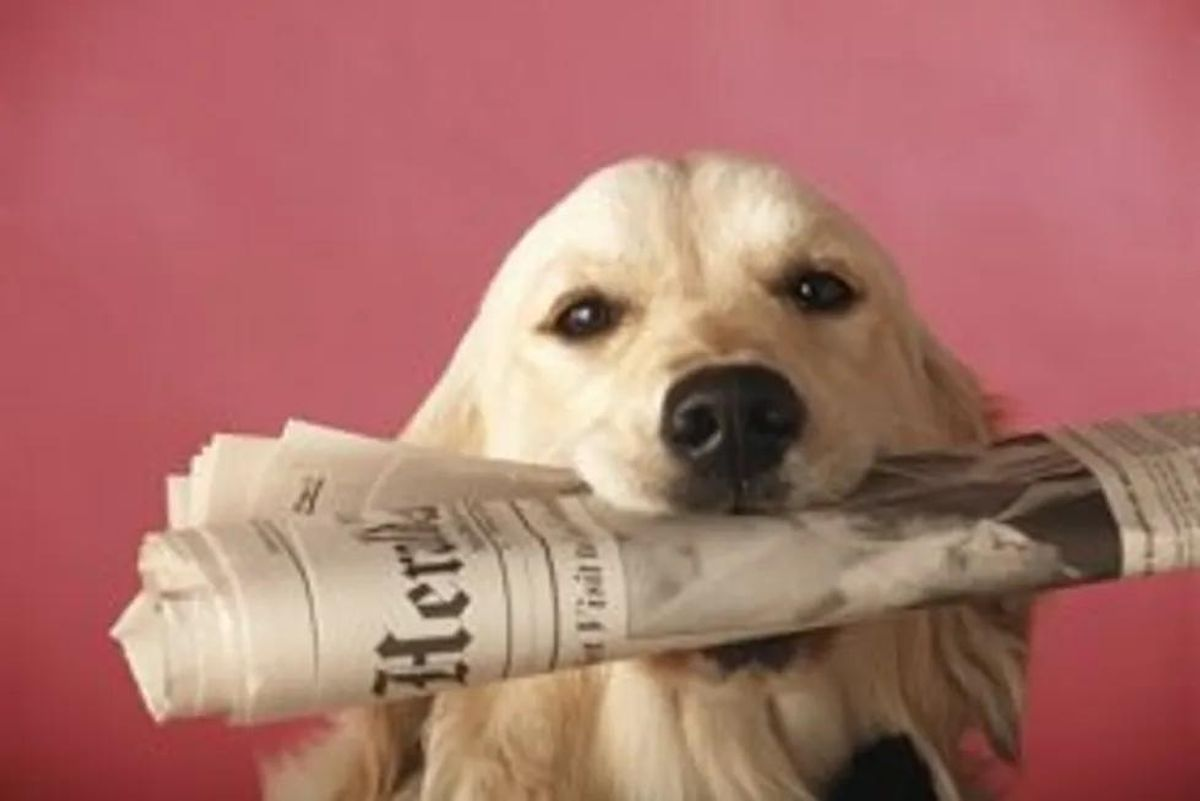 dog holding a newspaper in its mouth