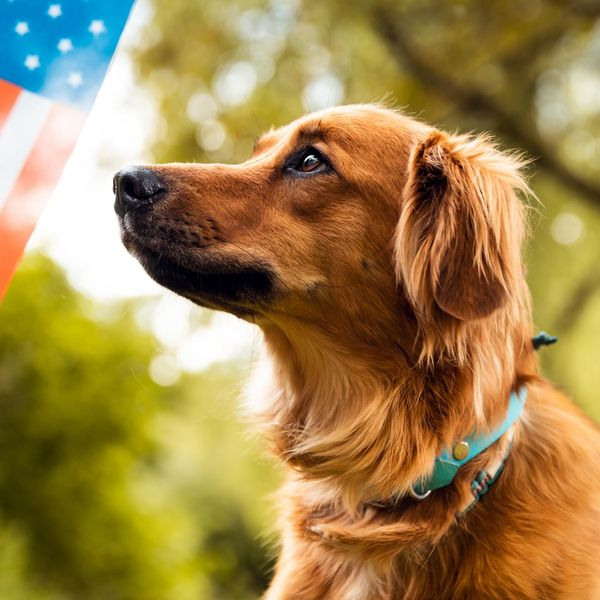 Service Dogs Can Help Veterans With PTSD – Growing Evidence Shows They May Reduce Anxiety in Practical Ways