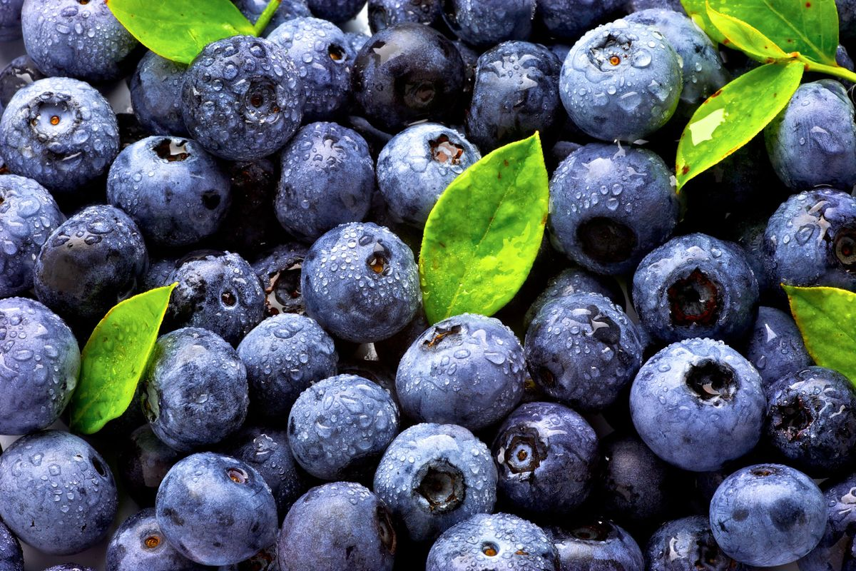 Watch Out for Fake Blueberries
