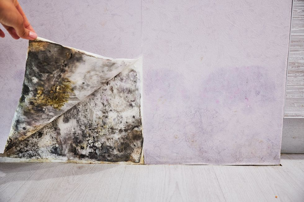 Prevent Mold Growth at Home